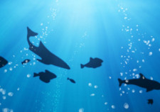description-free-download-life-under-the-ocean-wallpaper-desktop