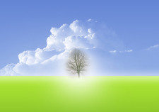 wallpaper-minimalista-arbol-retro-fatezoom-vida-life-tree-image-71223